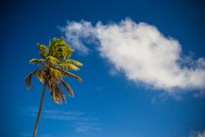 Free Palm Tree Against Blue Skies Royalty Free Stock Images - 83015279
