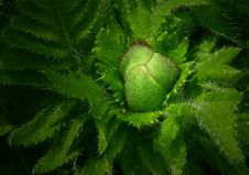 Free Green Spiked Edge Plant Close Up Photo Royalty Free Stock Photography - 83015587