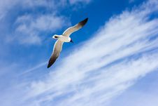 Free Seagull In Blue Sky Royalty Free Stock Photography - 83015877