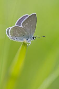 Free Gray White Moth Perched On Green Grass Stock Photography - 83015882