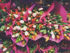 Free Orange White And Pink Petaled Flowers Bouquet Stock Images - 83015994