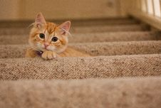 Free Orange Tabby Cat On Grey Staircase Royalty Free Stock Photos - 83016268