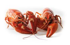Free Orange Freshwater Lobsters Royalty Free Stock Photo - 83016375