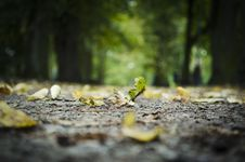 Free Surface Level Of Fallen Leaves On Tree Trunk Royalty Free Stock Photo - 83016415