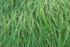 Free Green Grass Stock Photography - 83016562