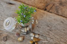 Free Green Plant On Brown Table Royalty Free Stock Photos - 83016638