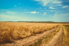 Free Brown Wheat Field Under White Clouds Blue Sky Royalty Free Stock Image - 83016786