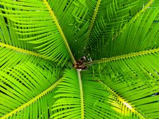 Free Green Palm Leaves Royalty Free Stock Photo - 83016835