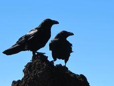 Free Black Birds Against Blue Skies Stock Image - 83016991
