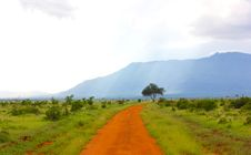 Free Dirt Road In Green Fields Royalty Free Stock Photos - 83017018