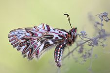 Free White Black And Pink Butterfly Royalty Free Stock Photo - 83017195