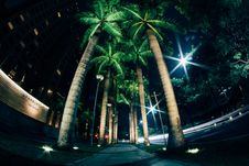 Free Palm Trees On Walkway Royalty Free Stock Images - 83017279
