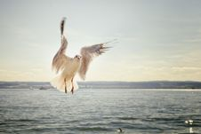 Free White Bird Bodies Of Water Under Gray Sky Stock Photos - 83017283