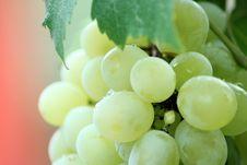 Free Grapes On Vine Stock Photo - 83017920