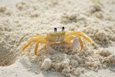 Free Yellow And White Crab On White Sand Beach During Daytime Royalty Free Stock Photography - 83017997