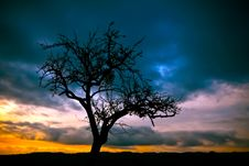 Free Silhouette Of Bare Tree Under Dimmed Sky During Sunset Royalty Free Stock Photos - 83018008