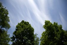 Free Blue Skies Over Tree Tops Stock Image - 83018031