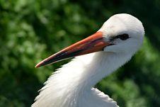 Free White Bird With Orange Beak Stock Images - 83018254