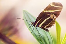 Free Black Yellow Butterfly On Green Leaf Plant During Daytime Royalty Free Stock Images - 83018499