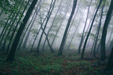 Free Forest With Thick Fog Royalty Free Stock Photos - 83018568