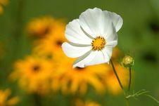 Free White Petaled Flower Near Yellow Petaled Flower Stock Image - 83018601