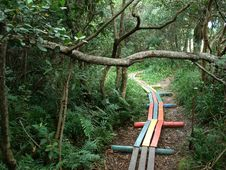 Free Wooden Path Through Woods Royalty Free Stock Photo - 83018835
