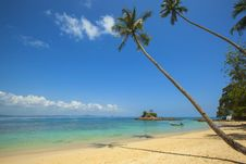 Free Green Coconut Palm Beside Seashore Under Blue Calm Sky During Daytime Royalty Free Stock Photography - 83018987