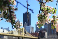 Free White Flowers On Tree Branch In Front Of Building Structures During Day Time Royalty Free Stock Photos - 83019068