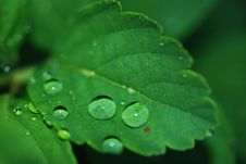 Free Water Drops On Green Leaf Stock Photos - 83019303