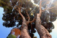 Free Sun Through Tree Top Stock Photography - 83019392