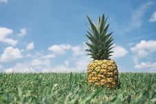 Free Pineapple In Green Field Royalty Free Stock Images - 83019729