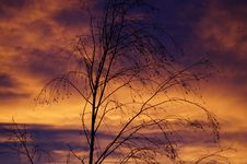 Free Bare Tree At Sunset Royalty Free Stock Photo - 83020015