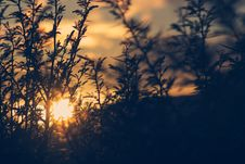 Free Silhouette Of Plant During Sunset Stock Photography - 83020072
