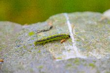 Free Caterpillar On Rock Royalty Free Stock Photography - 83020147