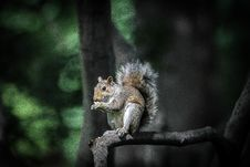 Free Brown And Black Squirrel Standing On Tree Branch During Daytime Royalty Free Stock Image - 83020176