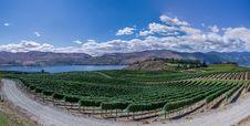 Free Vineyard Along Waterfront Royalty Free Stock Photo - 83021965