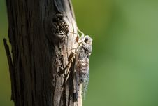 Free Brown Flying Insect Perching On Brown Trunk During Daytime Royalty Free Stock Photos - 83022148