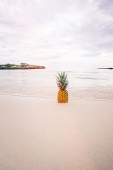 Free Pineapple Fruit On Seashore During Daytime Royalty Free Stock Images - 83022759