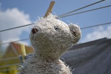 Free Teddy Bear On Clothesline Royalty Free Stock Photo - 83023355