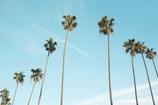 Free Palm Trees In Blue Skies Royalty Free Stock Photos - 83023738