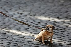 Free Small Dog On Road Royalty Free Stock Images - 83023979