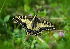 Free Butterfly In Green Garden Stock Photos - 83024123