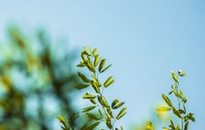 Free Green Plant Leaves And Blur Sky Stock Photo - 83024810