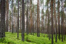 Free Green Leaf Trees And Green Grass Field During Daytime Stock Image - 83025171