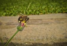Free Bee On Pin And Green Flower Stock Images - 83025174