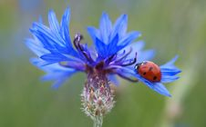 Free Red And Black Lady Bug On Purple Flower During Daytime Stock Photos - 83025213