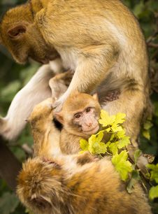 Free Monkey Looking After Baby Royalty Free Stock Photo - 83025345