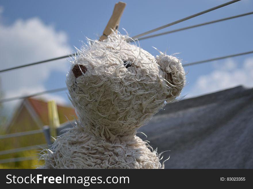 Teddy bear on clothesline