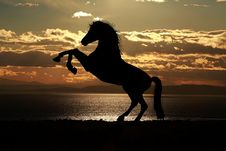 Free Silhouette Of Horse At Sunset Royalty Free Stock Photography - 83035467