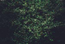 Free Sunlit Bushes Stock Image - 83035511